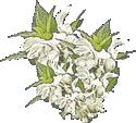 Acerola Bioflavon gross